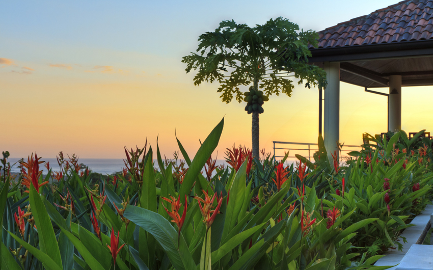 Sunset at a tropical garden and coconut tree in a villa overlooking Tamarindo and Pacific Ocean in Guanacaste