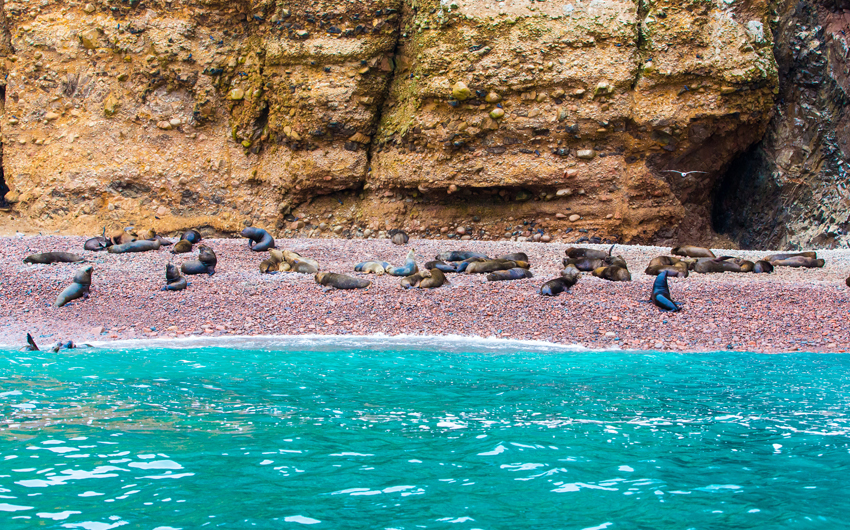 Sea lions relaxing on rocks of Ballestas Islands in Paracas National Park